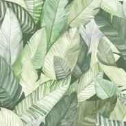 Banano Verde