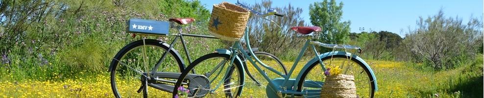 bicicletas-únicas