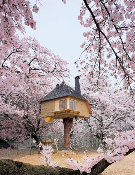 item1.rendition.slideshowWideVertical.treehouse-architecture-02-tea-house-japan