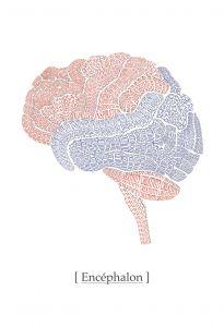 Mural Cerebro