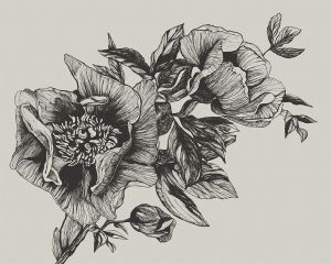 Mural Giant Peonies Ink