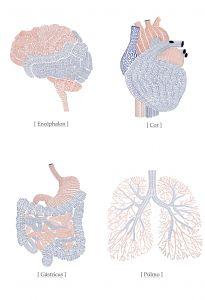 Anatomy Mural