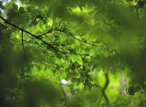 Green Leaves Mural