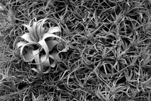 Flower in the Grass Mural