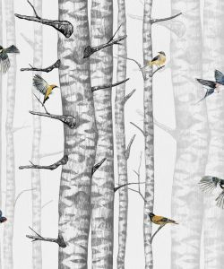 Birch Trees Grey wallpaper