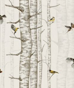 Birch Trees Beige wallpaper
