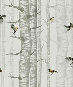 Birch Trees Silvester wallpaper