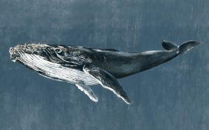 Mural Humpback Whale Vintage