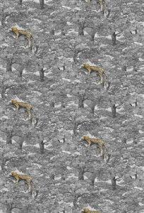 Samburu wallpaper