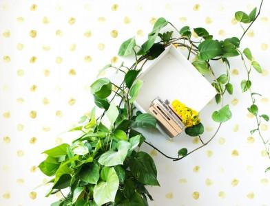 behang,bloemblad,beige