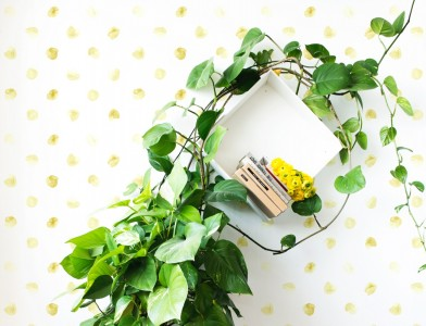 behang,bloemblad,gouden